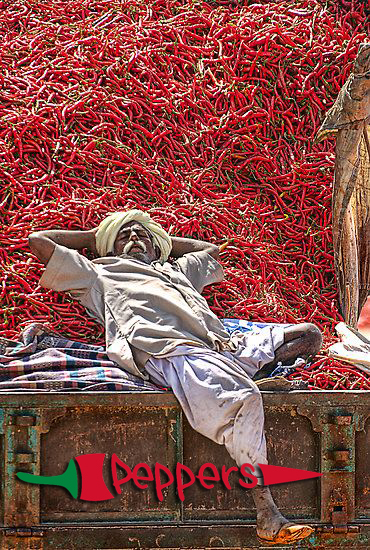 Waterford Indian Restaurant, chili harvest in Rajasthan, India